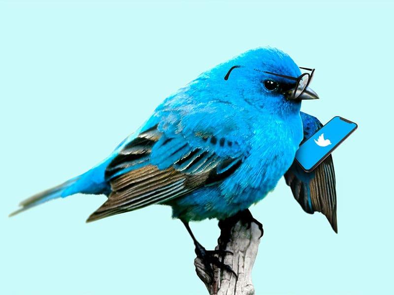 بازاریابی شبکه های اجتماعی با توییتر